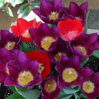 Царицынские оранжереи :: Наташа