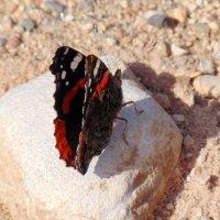 бабочка :: Юлия Ошуркова