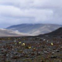 арктическая пустыня :: Алексей Логинов