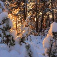 солнце в лесу :: Василий Иваненко