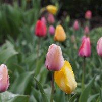 весна-весна :: Всеволод