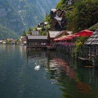 Ресторан с видом на лебедя. :: Alexander