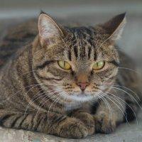 Кот в подъезде. :: Serge Lazareff