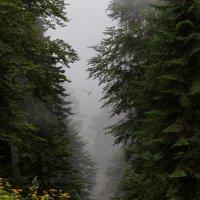 Полет в тумане :: олег