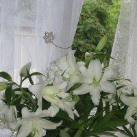 Лилии для Лилечки! :: Mariya laimite
