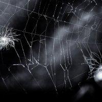 Десерт паука. :: Ирина Токарева
