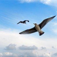 Балтийские чайки. :: Natali