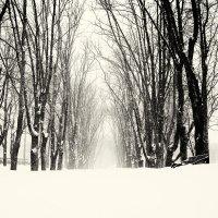 Её Снежность. :: Андрий Майковский