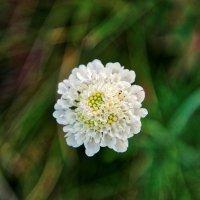 цветок... :: Alexandr Staroverov