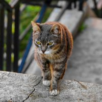 Римский кот :: dragonflight78.klimov