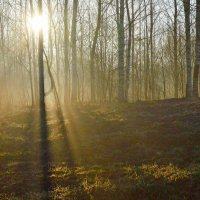 Утром весенним......... :: Юрий Цыплятников