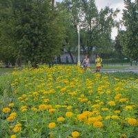 Лето в разгаре :: marmorozov Морозова