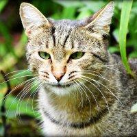 Кот..обычный.. :: Александр Шимохин