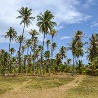 Природа острова Ко Ранг Яй :: Виктор Куприянов