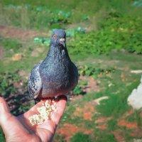 Даже голуби заметив камеру...позируют :: Олег Архипов
