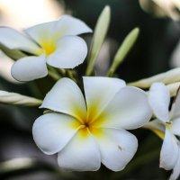 Экзотические цветы :: Nika Polskaya