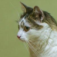 Есть ли у кошек ми-ми-мимика? :: Игорь Герман