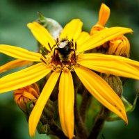 Мой цветок! :: Олег Неугодников