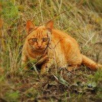 Неужели это взгляд кошки :: Валентина Пирогова