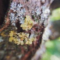 Кора дерева :: Evgeniy Gavrilin