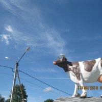 Корова :: Smit Maikl