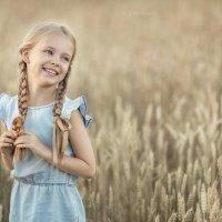 Пшеничные поля :: Ольга Никонорова