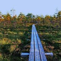 Национальный парк Кемери. Латвия. :: Liudmila LLF