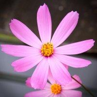 Цветок :: Константин Чебыкин