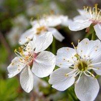 Весна :: Николай Потанин