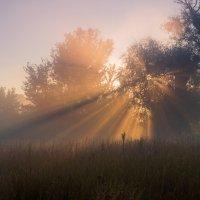 Лучи солнца :: Сергей Корнев