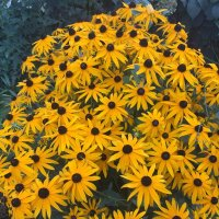 Цветок осени :: minchanka