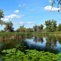 Озеро в августе. :: Анатолий