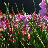 Цветы. :: Liudmila LLF
