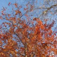 осень :: tgtyjdrf