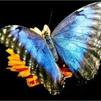 Butterfly :: Georgy Kalyakin
