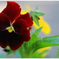 Маков цвет.. :: Tatiana Markova
