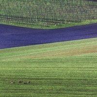 Геометрия полей в Южной Моравии :: Андрей Лукашенко