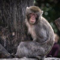 Глаза бы на вас не смотрели... из жизни зоопарка. :: Марина