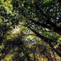 Кроны деревьев :: Oleg Sharafutdinov