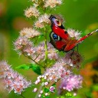 Бабочка. :: Виктор Шпаков