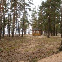 Беседка в сосновом лесу у озера :: Вячеслав & Алёна Макаренины