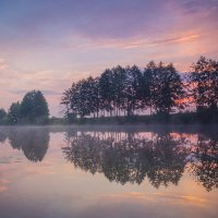 Все деревья встали в ряд :: Сергей Корнев