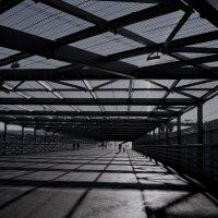 тоннель-клетка для болельщиков... :: Андрей Вестмит