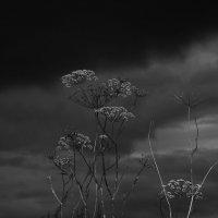 Чёрно-белым вечером... :: Дмитрий Костоусов