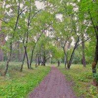 Пригородный лес! :: Елена (Elena Fly) Хайдукова