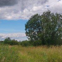 Природа в августе :: lady v.ekaterina