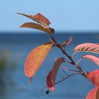 Скоро осень :: lady v.ekaterina