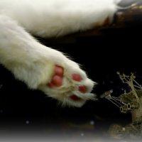 Сон кота Лапохода... :: Кай-8 (Ярослав) Забелин
