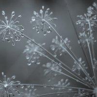 Укропчик под дождем. :: Сергей Щелкунов