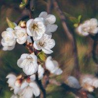 Весна :: Екатерина Shevi